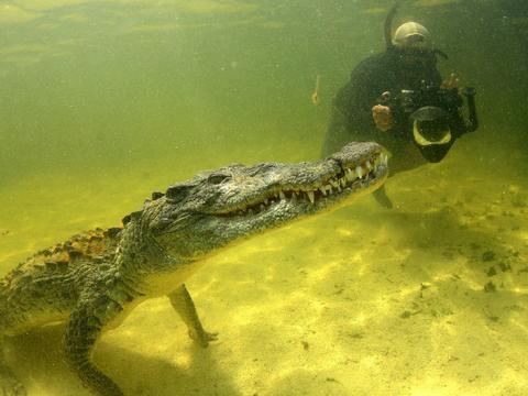 """也许他最大胆的摄影师,潜入水下近距离拍摄鳄鱼""""写真"""""""