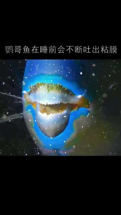 鹦哥鱼,第一次见这么憨的鱼🐟 (来源:海洋冷知识)