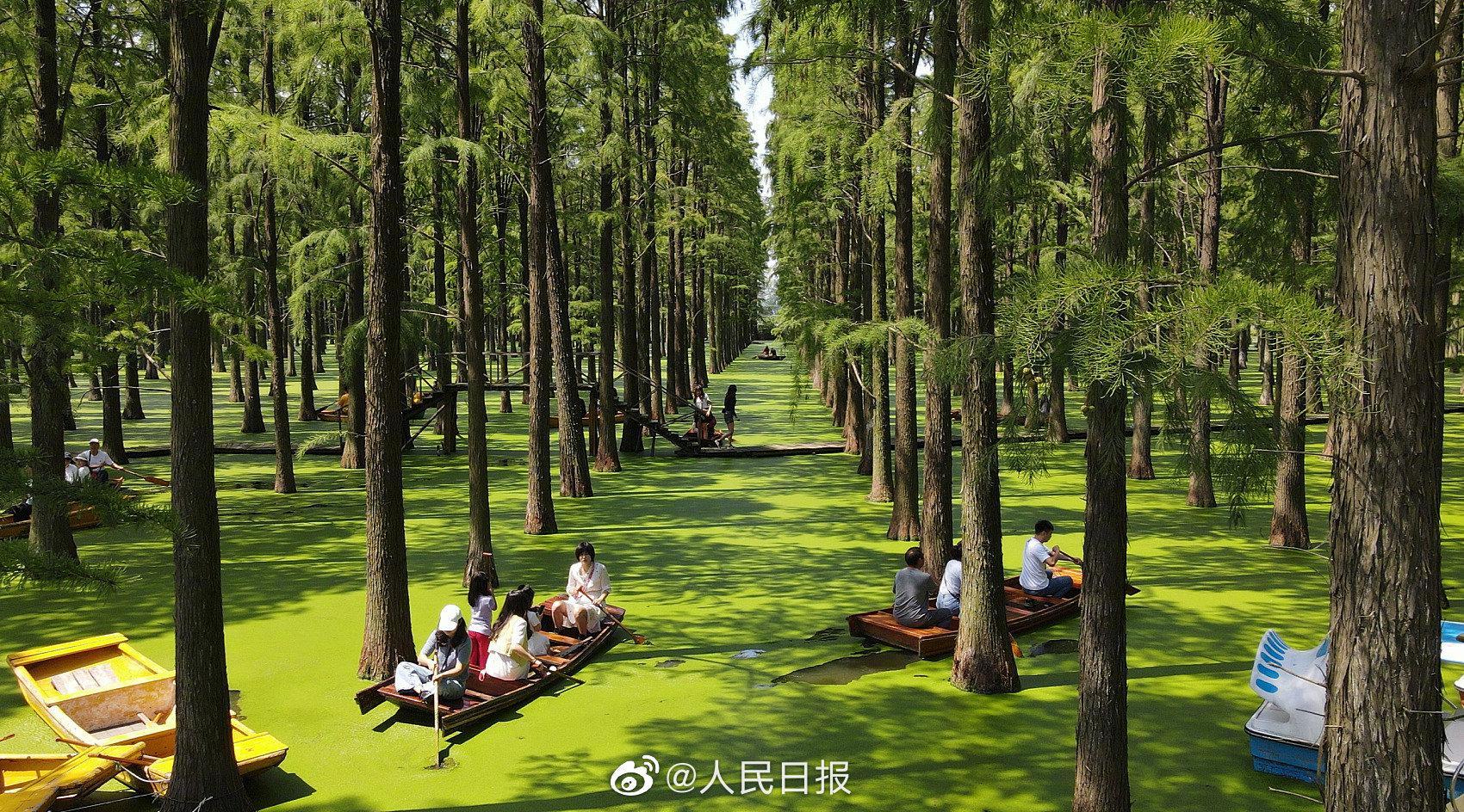 人在画中游!扬州渌洋湖水上森林