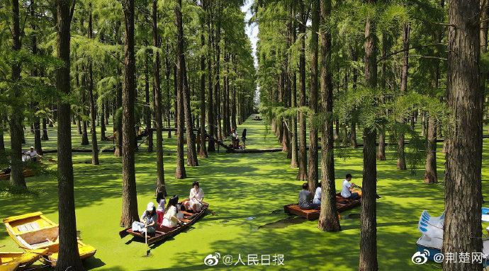 治愈 扬州渌洋湖水上森林