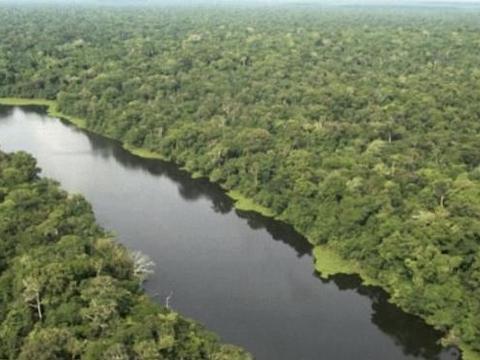 """亚马逊河的""""狠角色"""",食人鱼躲着游,鳄鱼只能选择同归于尽!"""