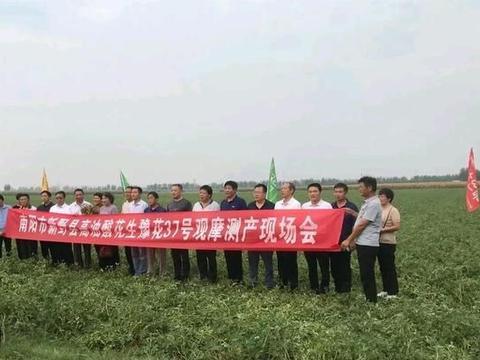 新野县举行高油酸花生新品种收获现场实地观摩会