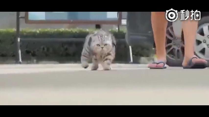 自从那天动物园回来,见了大老虎以后就这样走路了