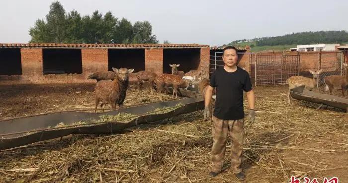 传统绿色养殖借助现代销售方式助村民致富奔小康