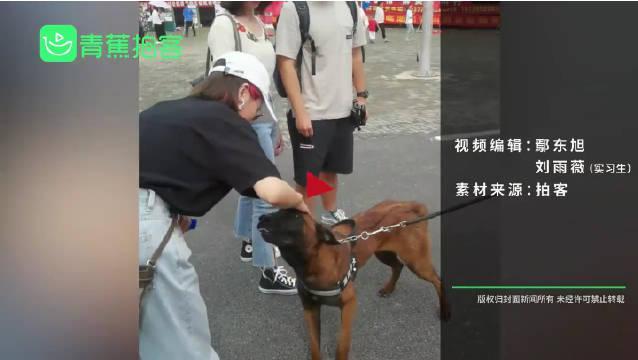 一只有理想的狗子!流浪犬凭实力成为警犬学员,将被培养成搜爆犬