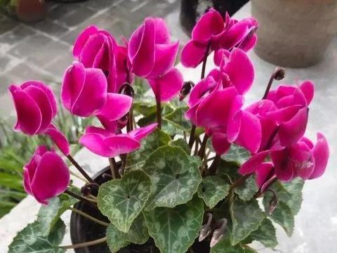 """秋凉后,可以""""唤醒""""4种休眠花,做对了早早孕蕾开花!"""