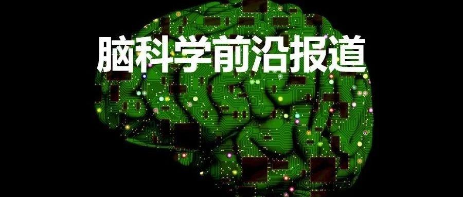 Cell重磅:修正传统理论!冷泉港实验室李波团队发现并解析非经典基底神经节环路