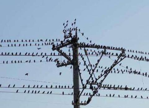 """一群鸟儿在高压线上停留,当它们集体起飞时,高压线""""瞬间爆炸"""""""