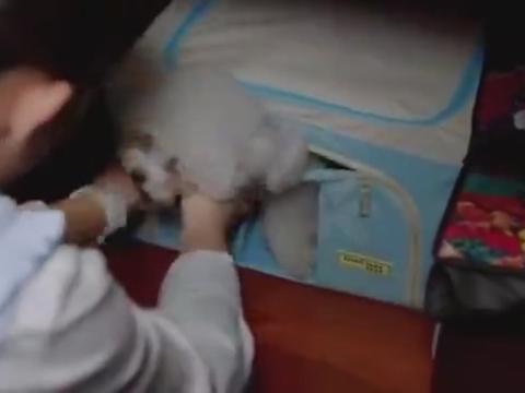 小别离:朵朵把同学的狗接到自己家里,怎料把它偷放在衣橱里了