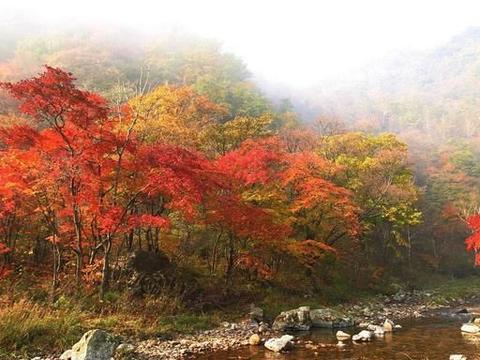 秋天赏枫叶,沈阳周边游除了本溪,这里的枫叶也很不错