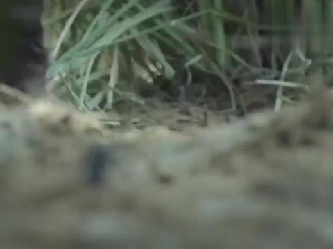 鬼子狙击手暗藏灌木丛,以为能以一敌百,没想到猎人中竟有神枪手