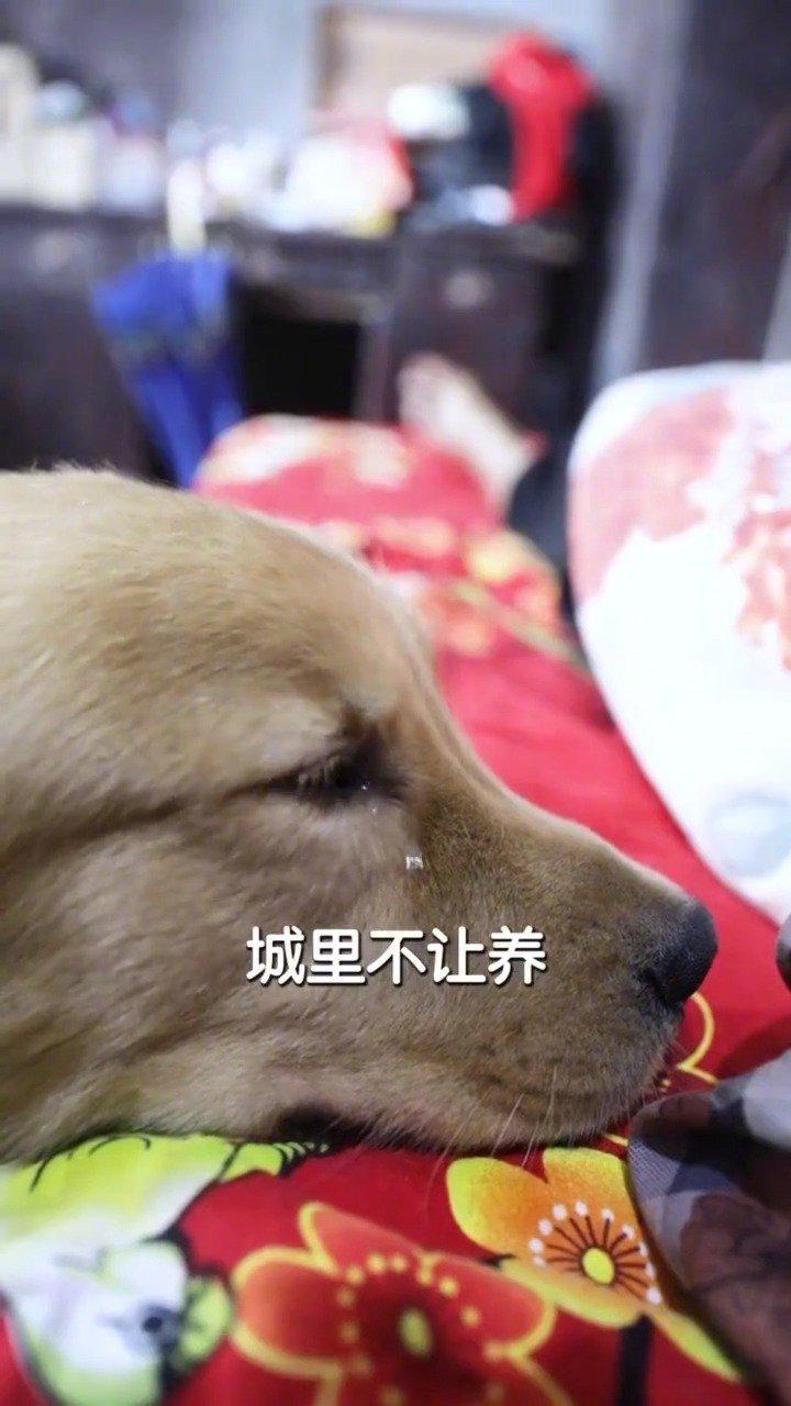金毛演技很到位,感人不浮夸,这一届的奥斯卡金狗奖给你了!!!