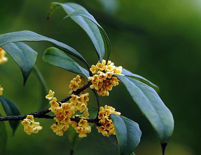 三角梅不用花钱买,随便揪根枝条插土里,成活率高还能开花