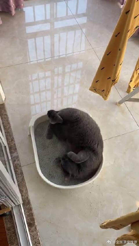 真的惊到我了,这猫不能要了!这是屎盆子你知道不!!