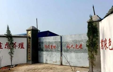 汝州市这个村,村主任姓牛,大力发展养牛,做的这些事真牛!