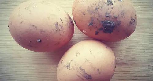 """皮上带""""鸡屎""""的鸡蛋更新鲜,保质期时间短?营养师告诉你答案"""