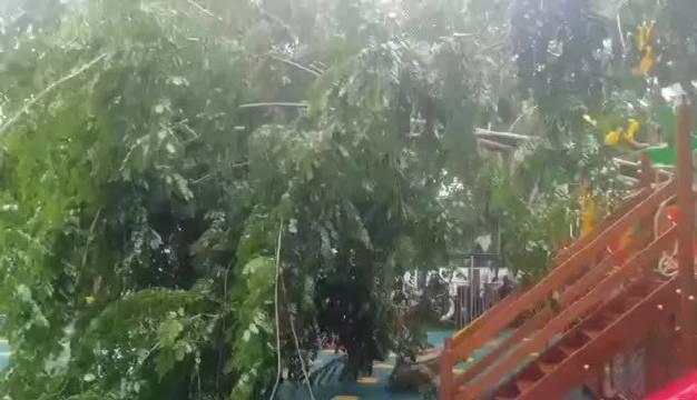 """突发!台风""""红霞""""刮倒大树砸塌幼儿园建筑和设施"""