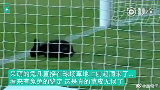 那些年误闯足球比赛的萌萌动物们……