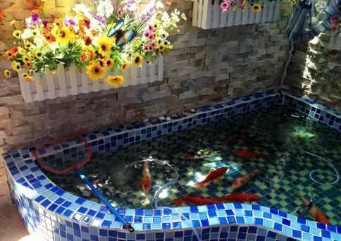 老公偷偷在阳台装修个鱼池,本想开骂,但鱼池漂亮的骂不出口!