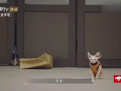 何炅撸猫给猫唱歌朗诵,给小点点拍的视频,太治愈了!