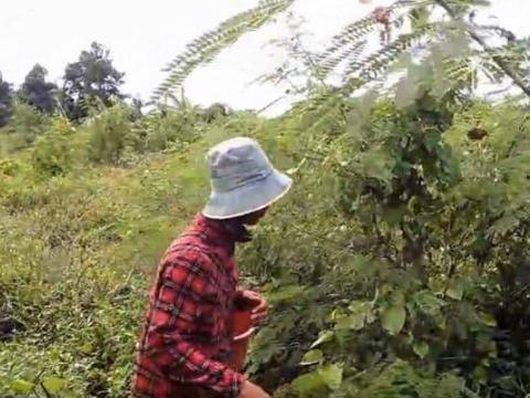 男子午后劳作见田边灌木异动,好奇上前竟然收获罕见珍馐