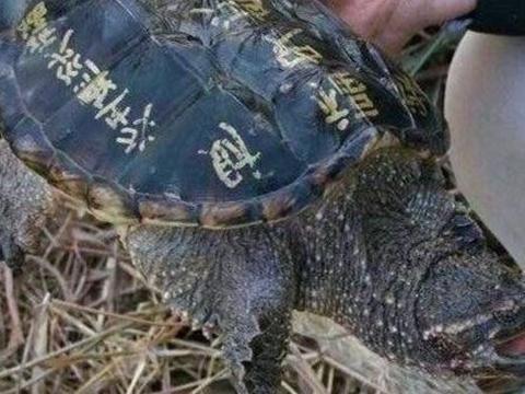 男子在河边发现一只老龟,老人看到连忙下跪磕头,令他百思不解