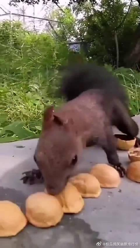 你要是松鼠,此刻你最想说句什么?