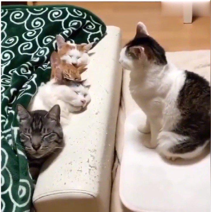 猫:没有床位了,凑活挤一挤吧~