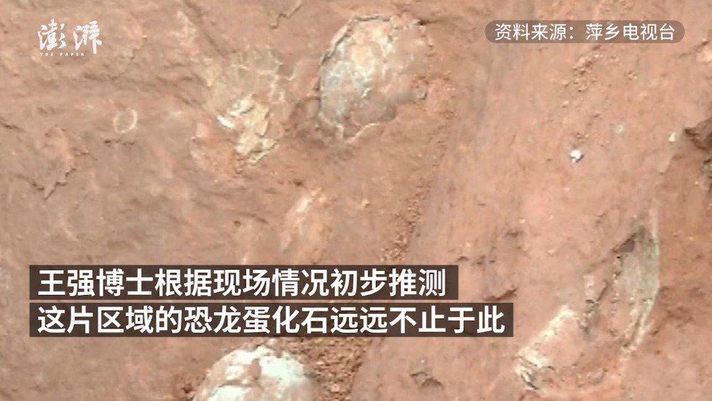 江西工地发现数十枚白垩纪恐龙蛋化石……