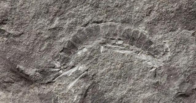 古生物学家发现地球已知最古老的精子