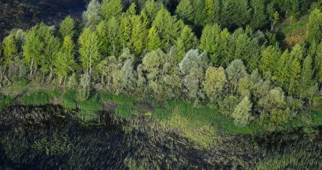 俄世界自然基金会介绍全球首个人工智能森林监控系统