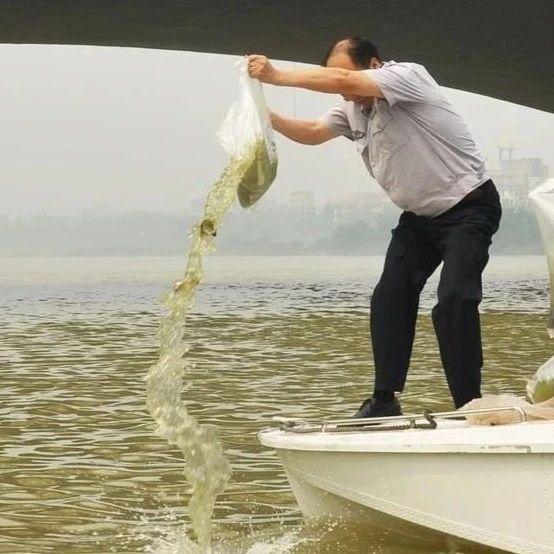 我市水生生物增殖放流活动启动,90万尾鱼苗放流水库