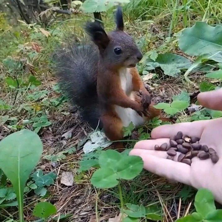 超警惕的小松鼠,感觉不对劲马上就一动不动,也太可爱了