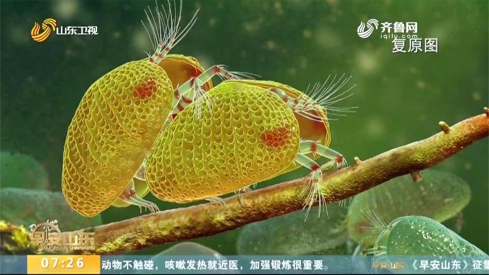 1亿年前的动物精子长啥样?体型微小,体长约1毫米,快来长长见识