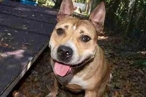 爱犬失踪3年后在啤酒罐上出现,主人看到后欣喜若狂:真的是你吗