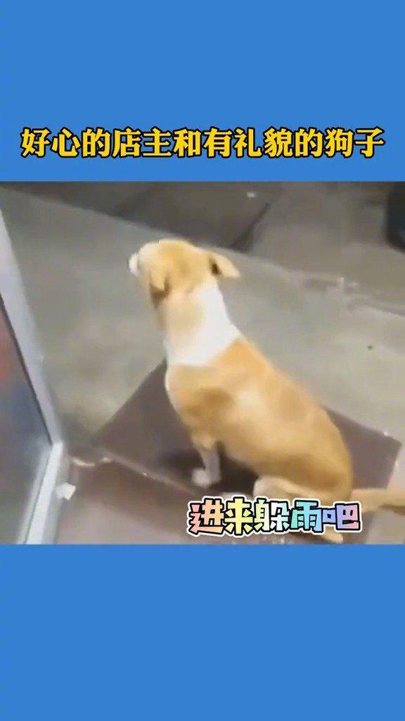 一条流浪狗在一家店门外躲雨,老板跟狗子的互动超暖心