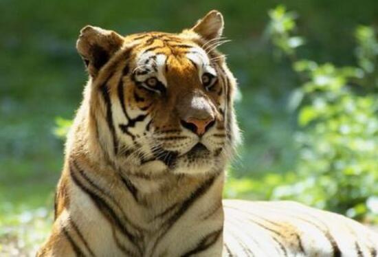 如何在动物园中拍摄更好的照片?一起看看这5个技巧