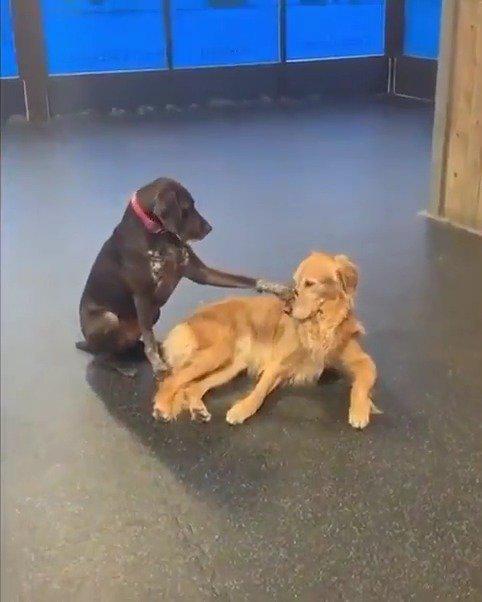 认识Ruby,她喜欢在日托时到处抚摸其他狗!