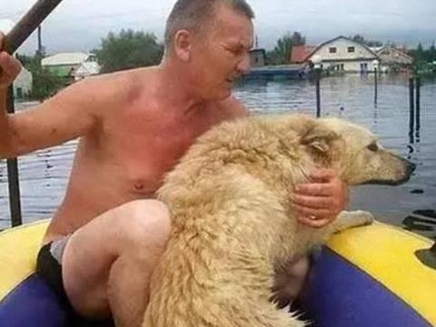 洪水来临时男子忘记狗子,三天后再回家,男子泪崩