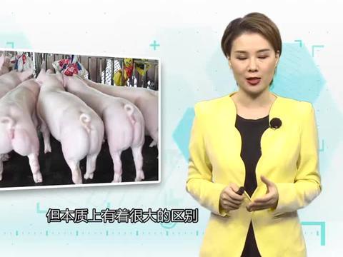 """中国""""超级猪""""来了!美国人造肉市场前景会不会被瞬间击垮?"""