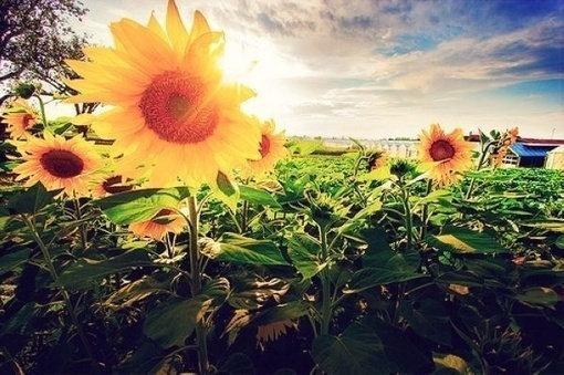 如果你因失去了太阳而流泪,那么你也失去了群星。 ——泰戈尔