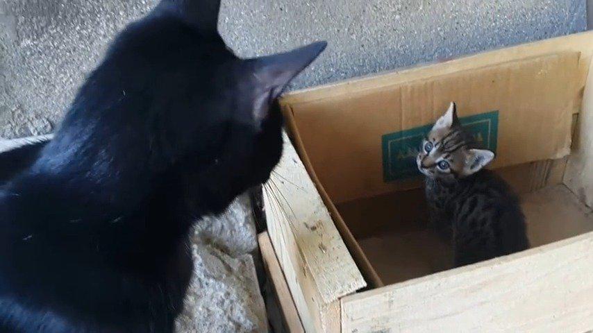 猫妈妈正和喵喵叫的可爱小猫谈话……