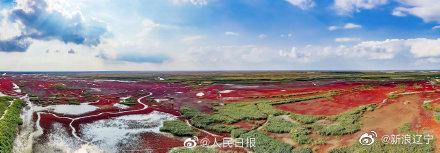 红海滩迎来最佳观赏季,网友:这是大自然的画卷!