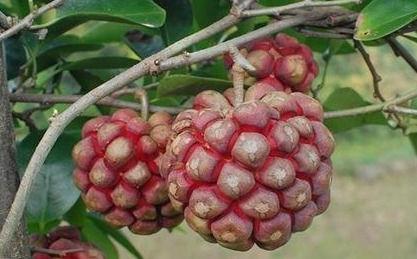 秋季养生要常吃3物,清热解毒、除湿利尿、消暑解渴,身体好