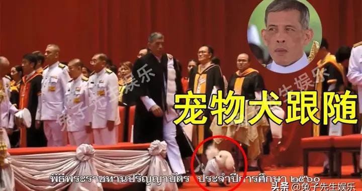 泰王带宠物犬参加毕业典礼,侍卫膝盖跪地走,小狗却穿军装随便跑
