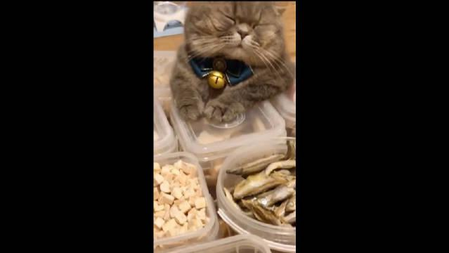 小猫咪:我的脸,可不是面团捏的啊!