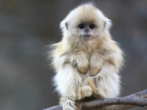 90岁大师说了:生肖猴10月初要大难临头,能躲过就是福!