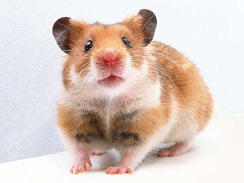 """10鼠9苦:以下4个年份出生的属鼠人天生""""老板命"""",看看你家有吗"""