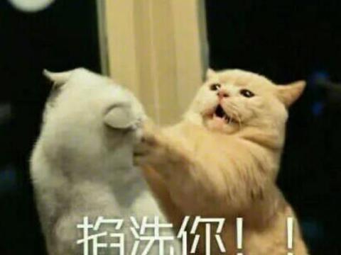 猫咪失误是什么样子?这些画面看着都疼啊