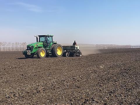 小麦底肥如何选择?复合肥和磷酸二铵哪个好?每亩用量怎么定?